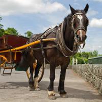 Paard en wagen Killarney