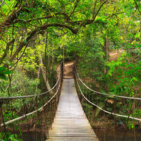 Bridge to the jungle,Khao Yai national park