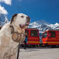 Jungfrau Eiger Walk Fallbodensee met Jungfraubahn