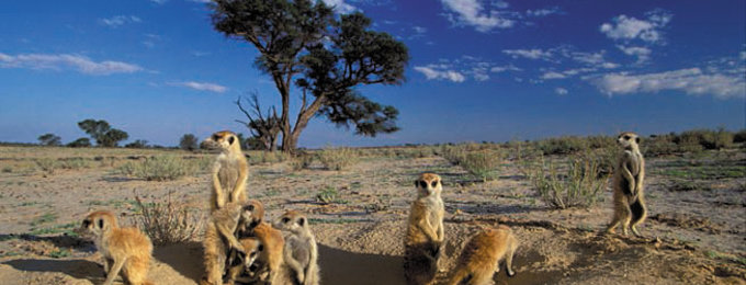 Groepsrondreizen Zuid-Afrika