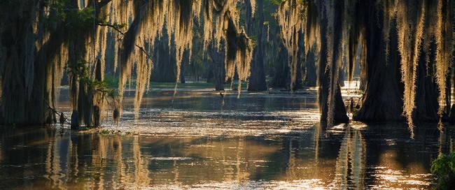 Bayou in Louisiana