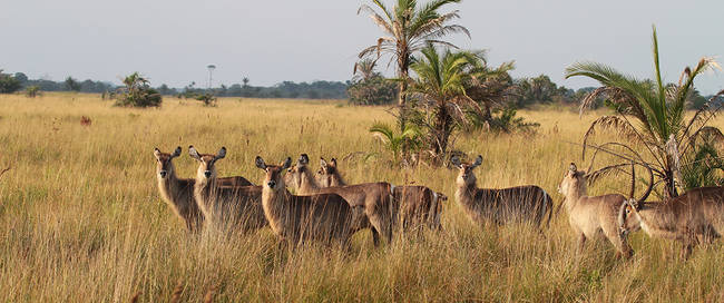 Isimangaliso wetlands park