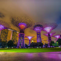 shutterstock_471801341 Singapore super trees