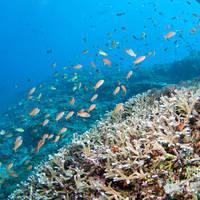 Onderwaterwereld van Bali