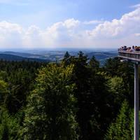 Wald Wipfel Weg Sankt Englmar