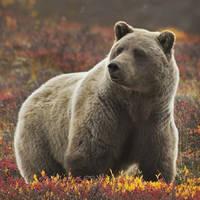 15 daagse autorondreis Alaska Yukon Highlights
