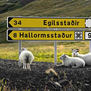 IJsland plaatsnaambord met schapen