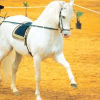 Jerez rijschool paarden