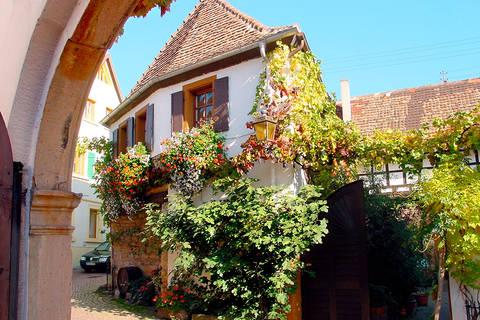 Korting vakantie Rheinland Pfalz 🚗️ACHAT Premium Neustadt an der Weinstrasse