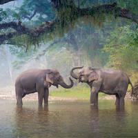 5-daagse Discovery Tour met chauffeur & gids Exotisch Zuid-Thailand