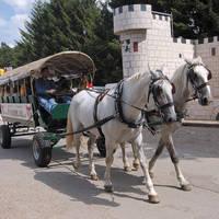 Paard en Wagen 1