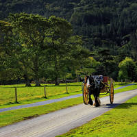 Killarney omgeving - Jaunting Car