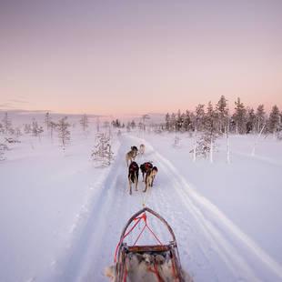 Huskysafari - Foto: Eeva Mäkinen
