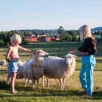 Kinderen bij schapen - Foto: Johan Willner