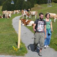 Wandelen van bergstation First naar Bort bij Grindelwald