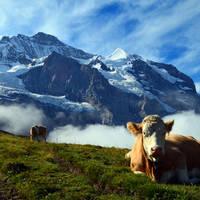 Zwitserland sfeer