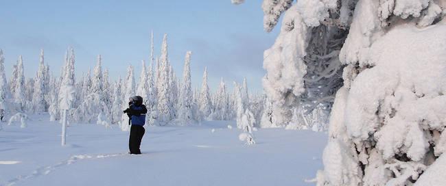 Winterwonderlandschap