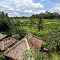 Uitzicht op de rijstvelden