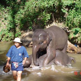 olifanten baden