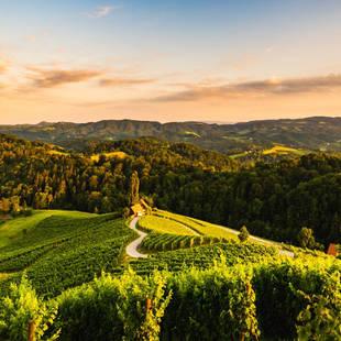 Slovenië wijnstreek Brda