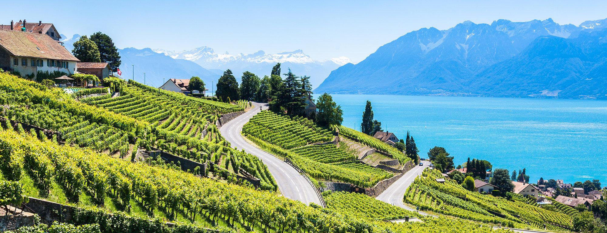 Wijnvelden Meer van Genève