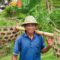 Arbeider op theeplantage