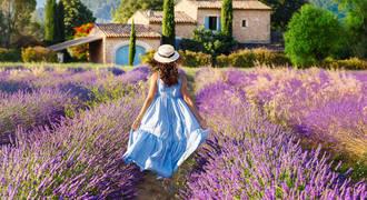 Provence lavendelvelden