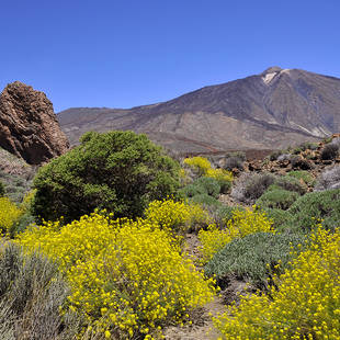 Tenerife, pico del Teide