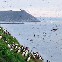 Vogelkolonie Noordkaap