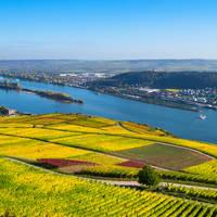6-daagse riviercruise met mps Statendam Beleef de Rijnromantiek naar Rüdesheim