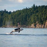 9-daagse autorondreis Whales, Bears and Vancouver Island