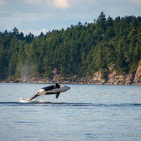 Whale watching in Canada
