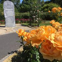 Rozentuin Town Park Tralee