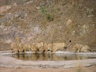 Zuid-Afrika - Kruger - Rhino Post Safari Lodge - 06