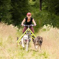 Mountainbiken met husky's