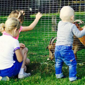 Kinderboerderij Bungalowpark Hoge Hexel