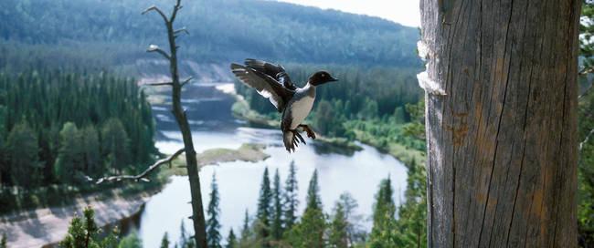 Oulankajoki rivier - Foto: Hannu Hautala