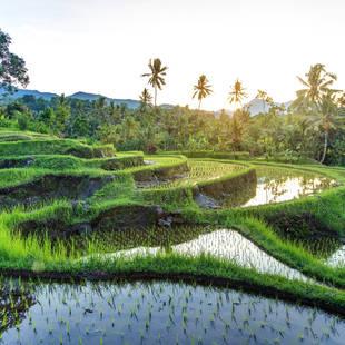 Vakantie Indonesie