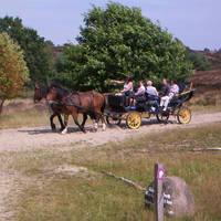 Koetstocht Lueneburger Heide