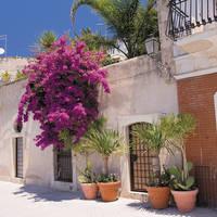sfeer huis met planten