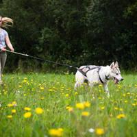 Wandeling met husky
