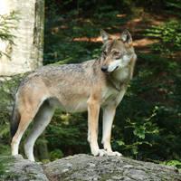 Nationale Park Beierse Woud