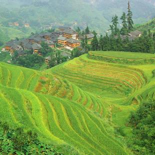shutterstock_66129883 rijsterrassen met dorpje