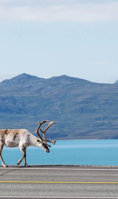 15-daagse fly-drive Noordkaap, Lofoten & Lapland