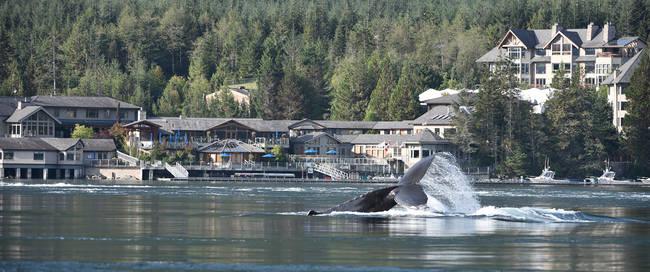 Walvissen bij Sonora Resort