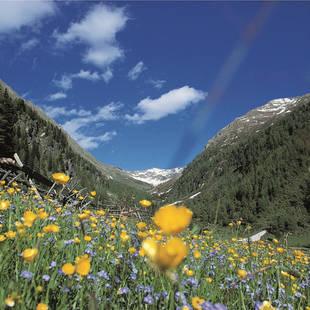 Bloemen in een dal