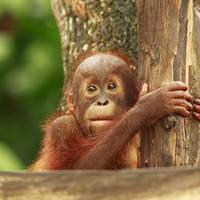 11 daagse groepsrondreis exclusief vliegreis Buitengewoon Borneo