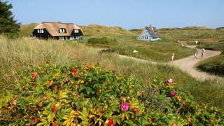 Cottage in de duinen