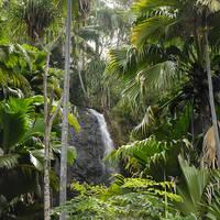 Waterfall Vallee de Mai - Seychellen