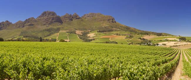 Wijnlanden rondom Stellenbosch